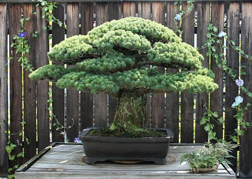 hiroshima-bom-nguyen-tu-nhat-b-7748-6734-1565758814[1]